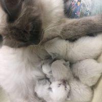 kitten pricing for wait list